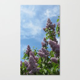 Lilacs No. 1 Canvas Print