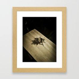 Bombus hortorum (The garden bumblebee) Framed Art Print