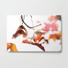Autumn Sonata II Metal Print