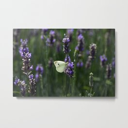 White Butterfly in a Lavender Field Metal Print