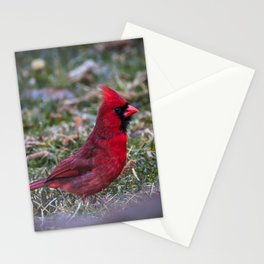 Male Red Cardinal Ohio Stationery Cards