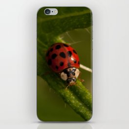 Red and black ladybird iPhone Skin