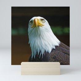 Bald Eagle Head Mini Art Print