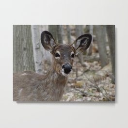Doe losing that winter coat Metal Print