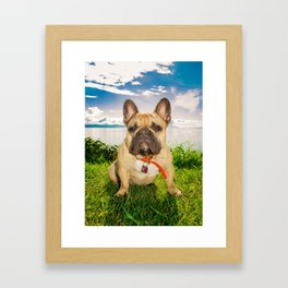 Frenchie in the Sun Framed Art Print