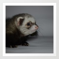 ferret Art Prints featuring Ferret by TheDookingFerret