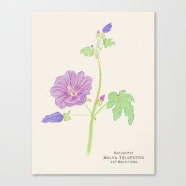 Botanical Sketches 5: Common Mallow Canvas Print