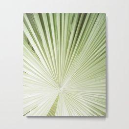 Fan Palm II Metal Print