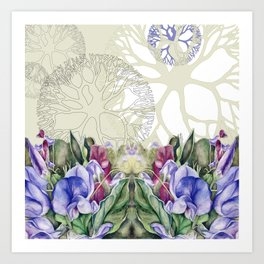 Lathyrus 4 Art Print