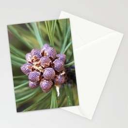 Vedauwoo Stationery Cards