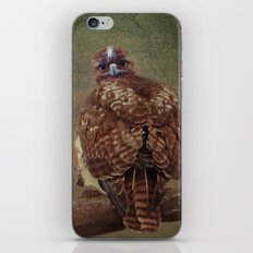 Young Red Tail Hawk iPhone & iPod Skin