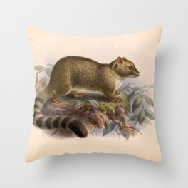 Vintage Scientific illustration, c. 1880 (Ring-tailed cat) Throw Pillow