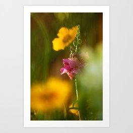 Pink Snapdragon Flower Art Print