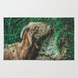 Iberic Goat eating some natural green Rug