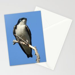 Male Tree Swallow Stationery Cards