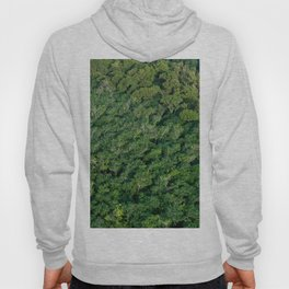 Arial tropical forest Hoody