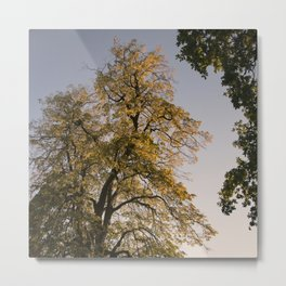 Perfect autumn-sunset colors Metal Print