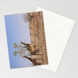Giraffes in Kruger National Park, South Africa Stationery Cards