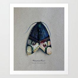 ramadasa pavo moth Art Print