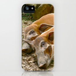 Red River Hogs taking a nap iPhone Case