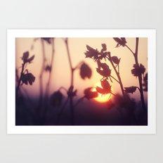 Garden Sunset Art Print