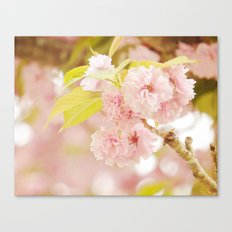 Pink Flower Photography | Shabby Chic Blossoms Canvas Print