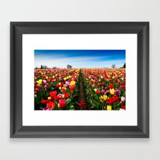 Coloring Vanishing Point, Tulip Festival in Woodburn, Oregon Framed Art Print