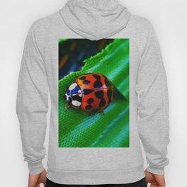 Ladybug on Leave Hoody