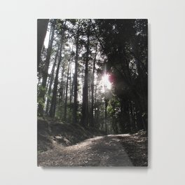 Forest Walks 2 Metal Print