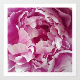 I Love peonies Art Print