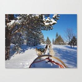 Dog Sledding Canvas Print