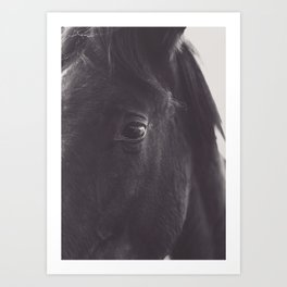 Original wild horses photo, nature landscape, animal lovers, love, black & white photography, horse Art Print