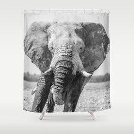 B&W Elephant 5 Shower Curtain