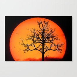 Sunset With Winter Tree (Landscape) Canvas Print