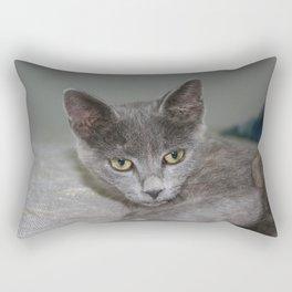 Beautiful Portrait of A Grey Russian Cross Tabby Cat  Rectangular Pillow