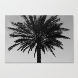 Big Black and White Palm Tree Canvas Print