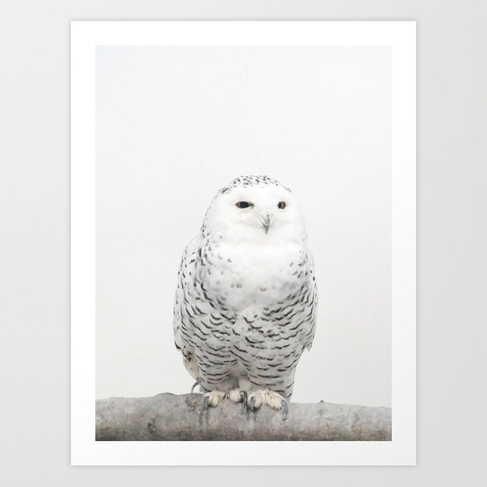 snowy owl art print by creaturecomforts society6