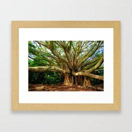 Hana Banyan Framed Art Print