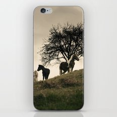 caballos iPhone & iPod Skin