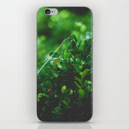 Cobwebs iPhone Skin