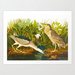 Night Heron, or Qua bird Art Print