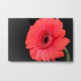 Red Flower Macro Shot Metal Print