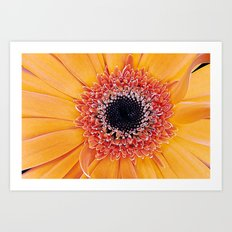Daisy 3 Art Print