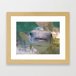 Smiling Fish Framed Art Print