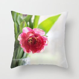 Pink tulip in a vase, window on the background. Throw Pillow