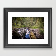 Trees - Hot springs in Olympic National Park Washington, Cascadia - Travel Natural Hotsprings trees Framed Art Print