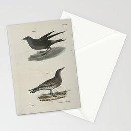 1401 295 The Fork tailed Petrel (Thalassidroma leachi) 296 The Laughing Gull (Larus atricilla)26 Stationery Cards