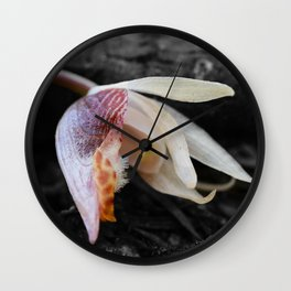 Albino Calypso Orchid in Selective Black and White Wall Clock