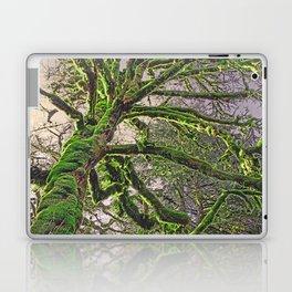 GREAT RAINFOREST MAPLE TREE Laptop & iPad Skin