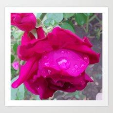 Rose Water Art Print